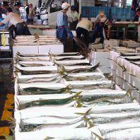 魚屋が意地をかけた旬鮮