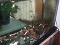 ~オマール海老の水槽~生きているオマール海老を調理するのでとっても新鮮♪