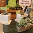 SMILE COFEE(スマイルコーヒー)では各種植物も販売しております★