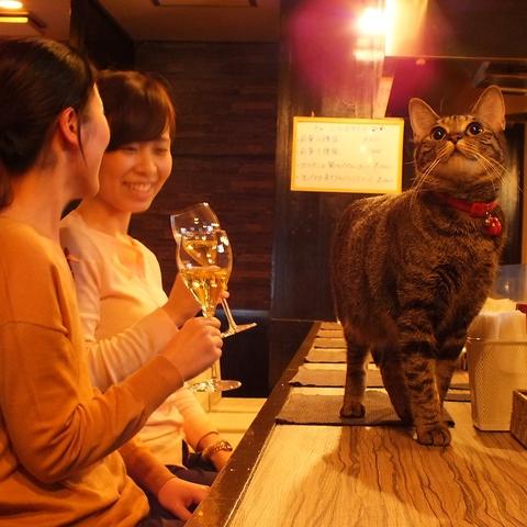北野坂に佇む隠れ家的なイタリアン食堂。お家みたいな寛げる雰囲気が◎コース2300円~