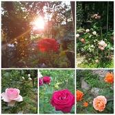 バラ、オレンジ、モモ、ブルーベリーなど季節の花と果樹を散策☆