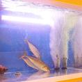 店内にある生簀(いけす)から取り出された新鮮な魚介を御堪能して頂けます!