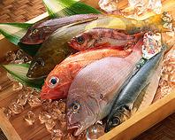 産地直送鮮魚