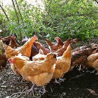料理には比内地鶏の卵を使用!!