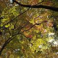 秋の紅葉♪