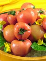 自社栽培のトマトを使用