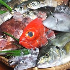 魚市場 魚鮮 うおせんの特集写真