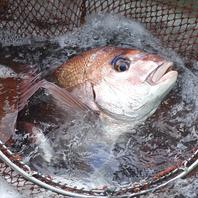 舞阪から仕入れる活きのいい鮮魚を堪能!!
