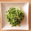 料理メニュー写真豆苗の塩味炒め