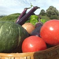 【農園】自家農園直送の新鮮お野菜