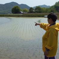 自家水田でお米作りをしています!