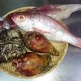 岩牡蠣、生牡蠣、白烏賊、赤むつ、ホヤ、白バイ貝、他
