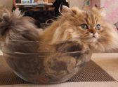 猫まるカフェ 上野のグルメ