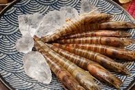 【天草産】旬の天草産の海鮮食材と地酒をご提供…