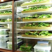 新鮮野菜約15種!全て食べ放題♪