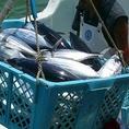 石垣島の美味しい魚介を食べてもらいたいという思いを込めて。その日の新鮮魚介をできるだけ早く食べてほしい。 その考えから価格はリーズナブルに、そしてボリューミーにご提供しております!石垣島の魚介も「源」で食べればイメージも変わるはずです♪
