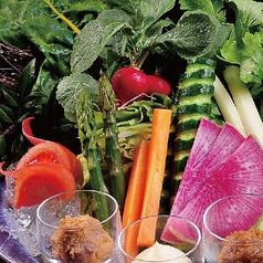 朝もぎ野菜のがぶりつき