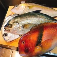 天然の珍しい魚