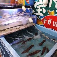 全国の漁港から直送した鮮魚を店内の大型生け簀から提供