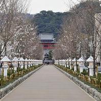 観光地鎌倉でおいしい食を楽しんでください☆