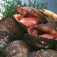 ≪赤貝≫たんぱく質が多く含まれていて、ビタミンB1・ビタミンB2、特にビタミンAが多いのが特徴です。コレステロールをさげる作用のあるタウリンや肝臓によいグリコーゲンも含まれています。またヘモグロビンが含まれていることもあり、鉄分もほうれん草に勝っているので貧血にも大変効果的で女性の方は赤貝を召し上がれ♪