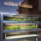 【自家栽培スペース】店内入ってすぐ左には自家栽培のショーケース♪