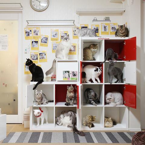 11種30頭の猫とまったり・・・♪