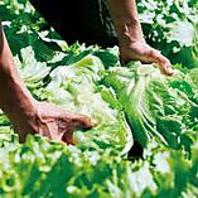 全国から仕入れた新鮮・美味しいお野菜をご提供♪