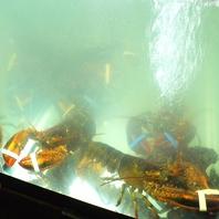 オマール海老が躍る巨大水槽がお出迎え!
