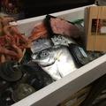 料理メニュー写真千葉産ホンビノス貝、宮崎産ぎんかがみ、北海道産生甘海老、鱈の白子、三重県産生シラス