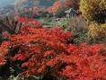 秋の紅葉は、箱根一番人気シーズン☆一度ぜひ見学にお越しください☆