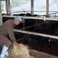 毎日牛と向合い良いお肉になるよう育てます