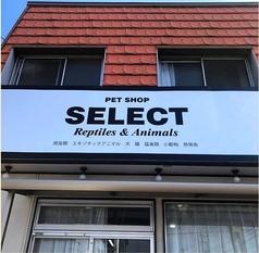 PET SHOP SELECTの特集写真