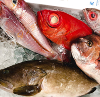 市場から直接買い付け☆海鮮系料理おすすめです
