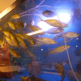 活魚用の水槽。鮮度抜群の刺身を堪能できる