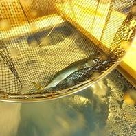 全国の漁港から魚を直送!