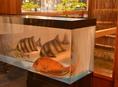 新鮮なお造り・お魚料理をご提供します。