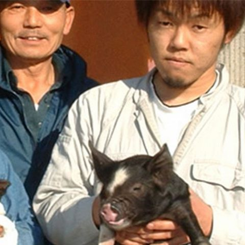 黒豚の中の王様、鹿児島県産黒豚。どんぐり育ちの贅沢な豚です。幾度も品種改良し、今もなお成長を続ける努力家の豚でもあります。さっぱりとした味わいと体への良さは他のお肉には真似する事ができない黒豚ならではの魅力となっております。