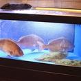 《生け簀》真鯛や平目、アブラメなどの季節の鮮魚