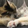 猫の「ひなたぼっこ」のおすすめポイント1