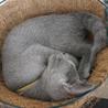 猫の「ひなたぼっこ」のおすすめポイント3