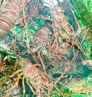 三崎港にて直仕入れ。新鮮な魚介をその日のうちに…