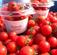 糸島自社農園のこだわりのフルーツミニトマト