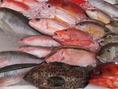 【沖縄鮮魚】その日上がった新鮮な沖縄鮮魚を真空パックにて直送、鮮度抜群のままお店に届きます。「お刺身」、塩と泡盛と出汁で煮付ける「マース煮」、「アクアパッツァ」にてご提供いたします。