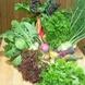 採れたての新鮮野菜!
