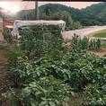 島根県の契約農家直送の野菜を仕様!