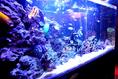かわいいお魚たちがいっぱいアクアリウム☆