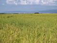 当社指定農園で有機栽培されている長岡産コシヒカリご賞味ください。