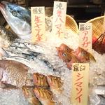 【今が旬】活きのいい鮮魚を毎日多数ご用意しております!かっこにきたら鮮魚盛り合わせは必須です。