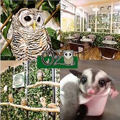 ふくろうカフェ OZの画像